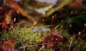 automne-microcosmos